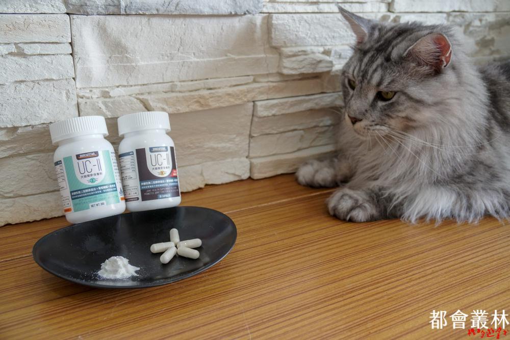 【貓咪營養品】貓咪關節營養補充|汪喵星球UC-II®膠原蛋白關節保養粉|日常保養、MSM加強配方|